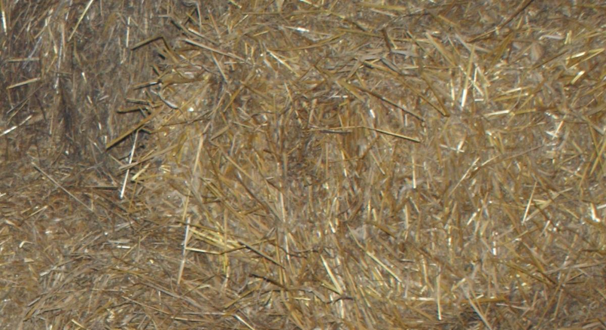 chopping-straw.jpg