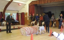 Pointers are not designed for agility, but it was fun and everyone enjoyed it.